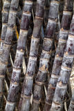 Cane Royalty Free Stock Photography
