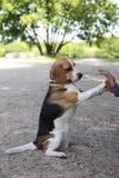 cane Fotografia Stock Libera da Diritti