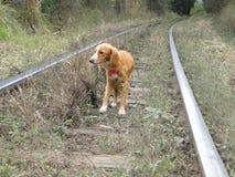 Cane abbandonato fotografia stock