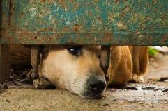 Cane abbandonato che guarda fuori dal recinto Immagini Stock