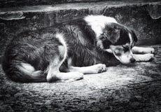 Cane abbandonato che pone sulla via Fotografia Stock Libera da Diritti
