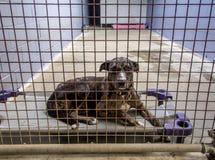 Cane abbandonato del riparo senza tetto dietro le barre alla libbra immagine stock