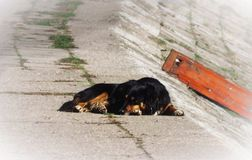 Cane abbandonato pacifico che dorme sulla via fotografie stock