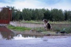 Cane abbandonato sulla via fotografie stock libere da diritti
