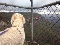Cane ad un'allerta nelle montagne blu Fotografia Stock Libera da Diritti