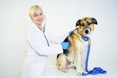 Cane ad un veterinario fotografie stock libere da diritti