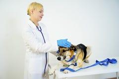 Cane ad un veterinario fotografia stock libera da diritti