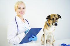 Cane ad un veterinario fotografia stock