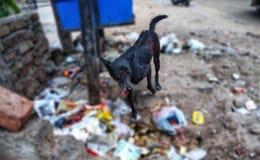 Cane affamato che cerca l'alimento fotografie stock libere da diritti