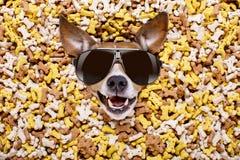 Cane affamato in grande monticello dell'alimento fotografia stock