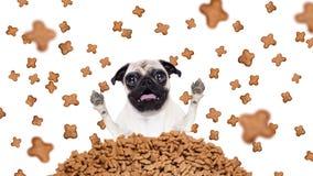 Cane affamato in una pioggia dell'alimento Immagini Stock
