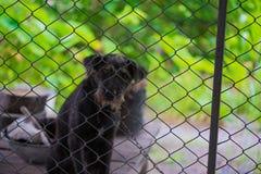 Cane aggressivo nero nella gabbia fotografia stock