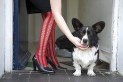 Cane ai piedini del `s della donna Fotografie Stock