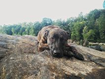 Cane all'aperto della natura immagini stock libere da diritti