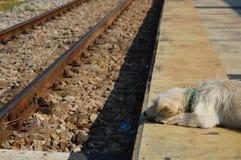Cane alla ferrovia fotografie stock