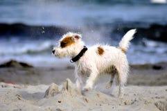 Cane alla spiaggia Immagini Stock