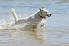 Cane alla spiaggia Fotografia Stock