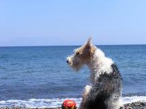 Cane alla spiaggia Fotografie Stock