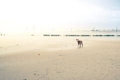 Cane alla spiaggia Immagine Stock