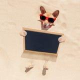 Cane alla spiaggia ed all'insegna Immagine Stock Libera da Diritti