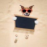 Cane alla spiaggia ed all'insegna Immagini Stock Libere da Diritti