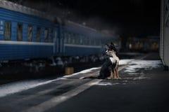 Cane alla stazione ferroviaria Viaggiando con l'animale domestico fotografie stock