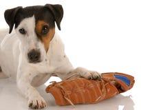 Cane allegro con il guanto di baseball Fotografie Stock Libere da Diritti