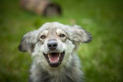 Cane allegro su una fine della passeggiata su Immagine Stock Libera da Diritti