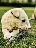 Cane, amante dei cani, stagioni invernali Fotografia Stock