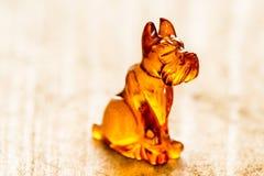 Cane ambrato, primo piano Fotografia Stock Libera da Diritti