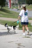 Cane ambulante della ragazza da River Immagini Stock