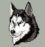 Cane amichevole sveglio, animale canino, mondo animale, emblema della testa di cane dell'illustrazione, paiting royalty illustrazione gratis