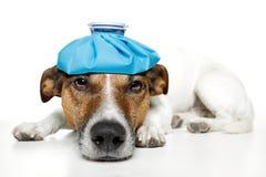 Cane ammalato fotografie stock libere da diritti
