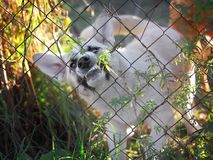 Cane arrabbiato in una gabbia d'acciaio fotografia stock libera da diritti