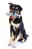 Cane astuto Fotografia Stock Libera da Diritti