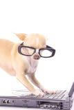 Cane astuto che trasmette un email fotografie stock libere da diritti