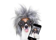 Cane astuto intelligente che prende selfie Fotografia Stock