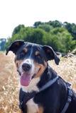 Cane in autunno immagini stock