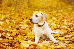 Cane in autunno Fotografia Stock