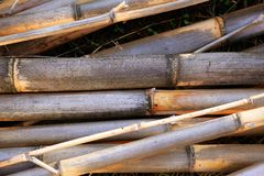 Cane background texture dried river canes Royalty Free Stock Photos