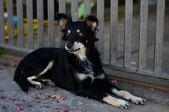 Cane bastardo del cane che gode della via Immagine Stock Libera da Diritti