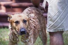 Cane Bathtime fotografia stock libera da diritti