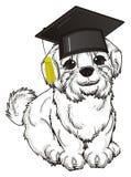 Cane bianco in black hat Fotografie Stock Libere da Diritti