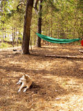 Cane bianco che risiede nella foresta nel campeggio Immagini Stock