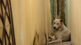Cane bianco che si trova fra la navata laterale stretta d'annata Fotografia Stock