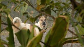 Cane bianco che sta nel giardino sotto l'albero fotografia stock libera da diritti