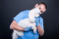 Cane bianco del bichon veterinario di esame o della tenuta fotografia stock libera da diritti