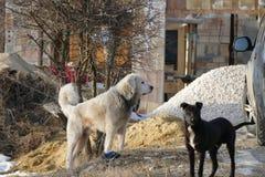 Cane in bianco e nero Fotografia Stock Libera da Diritti