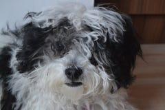Cane in bianco e nero del bambino Fotografia Stock