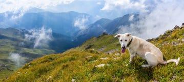 Cane bianco nelle montagne Fotografia Stock Libera da Diritti